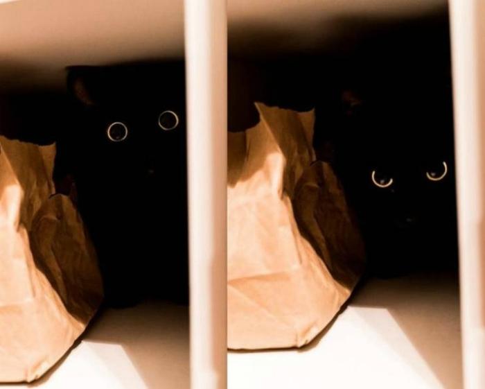 Два хищных глаза. | Фото: Izismile.com.