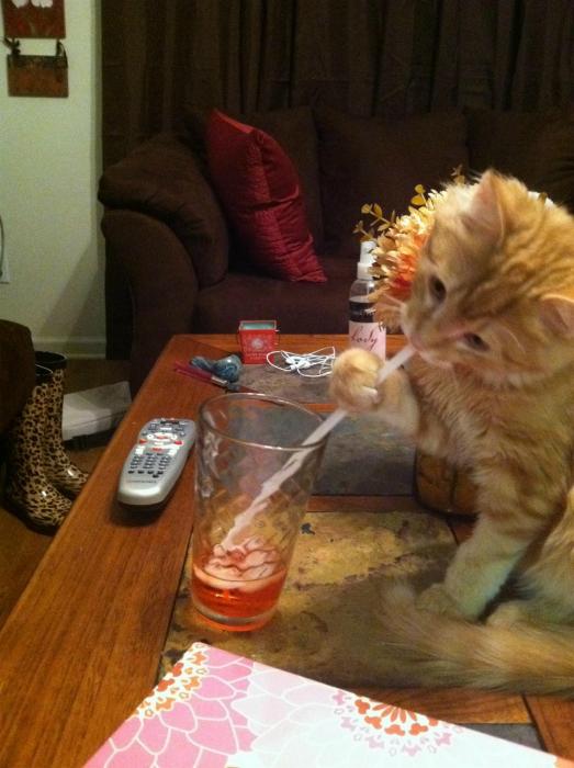 Талантливый котик.