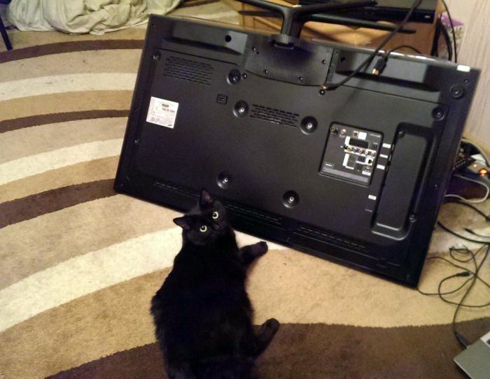 Дерзкий кот. | Фото: Barnorama.