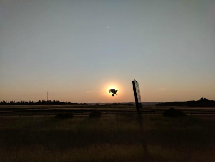 Птица в восходе.