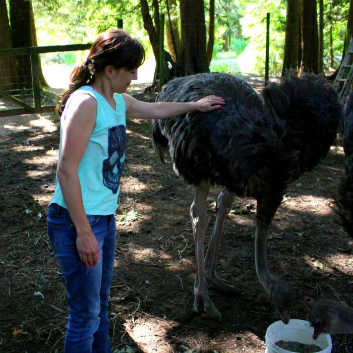 Няня для страуса.