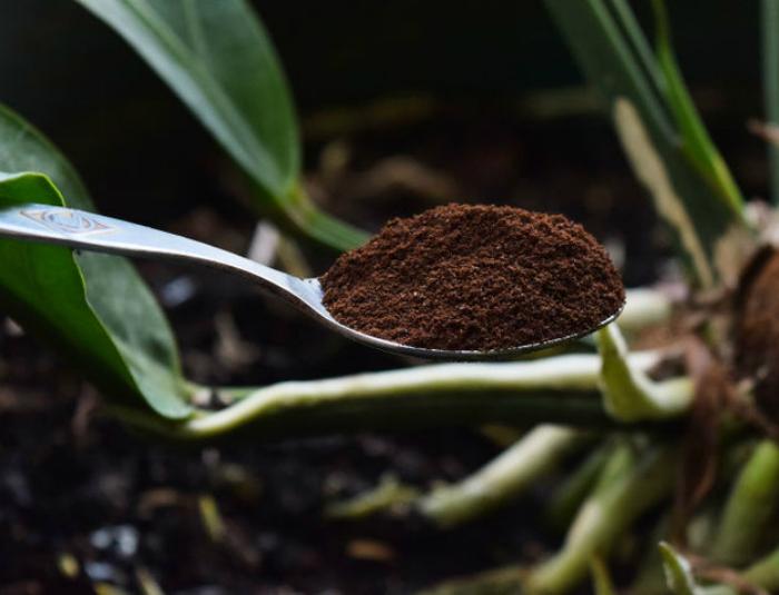 Кофейная гуща для подкормки растений.