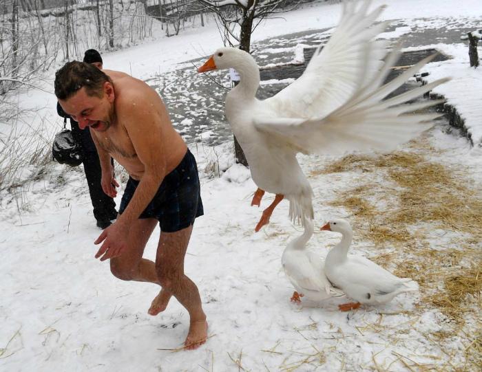 Кажется, птичка настроена враждебно! | Фото: Zefirka.