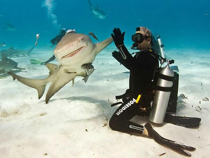 На редкость дружелюбная акула.  | Фото: Badabun Co.
