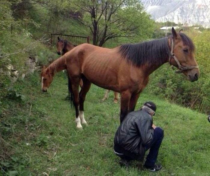 Странные лошади.