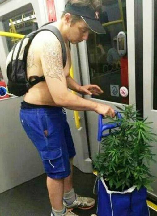 Перевозчик марихуаны.