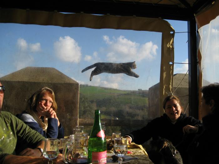 Кот в воздухе.