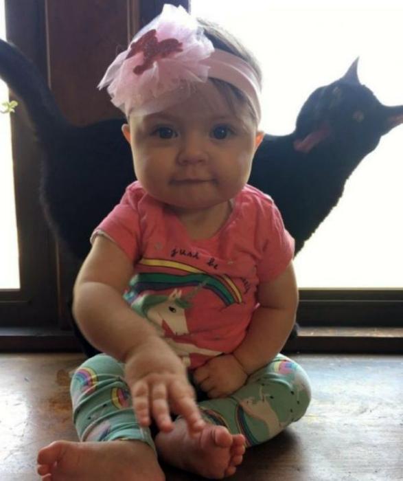 Странное поведение кота. | Фото: Smiшок.ком.