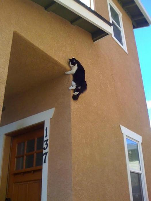 Возможно, этот кот на присосках. | Фото: Twitter.