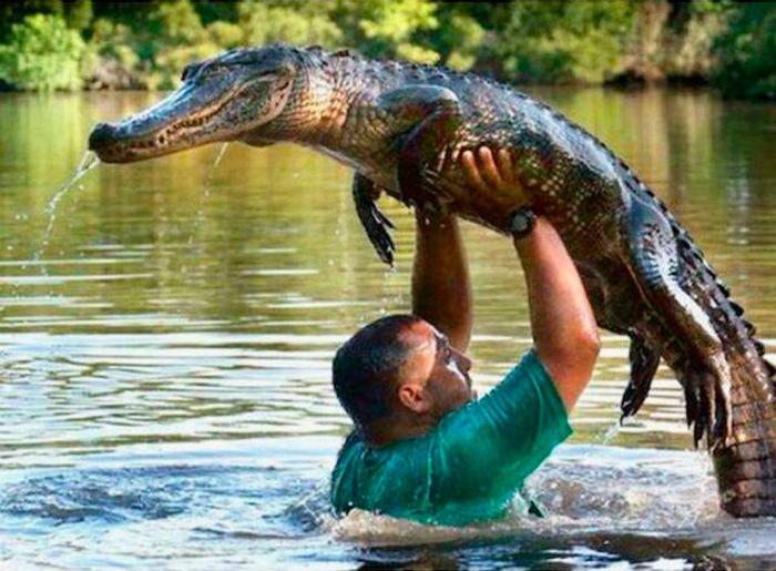 Заигрывать с крокодилом.   Фото: DlyaKota.Ru.