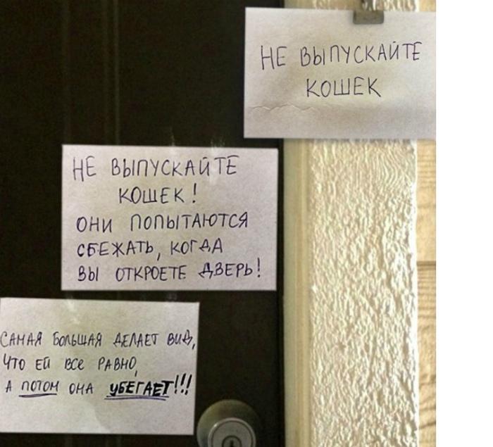 Выбегайте быстрее и захлопывайте дверь! | Фото: Yaplakal.