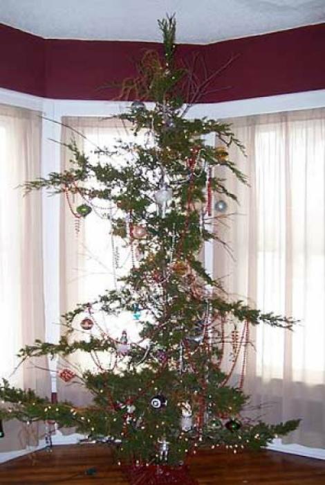 Плешивая елка.