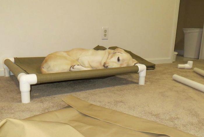 Спальное место для собаки.