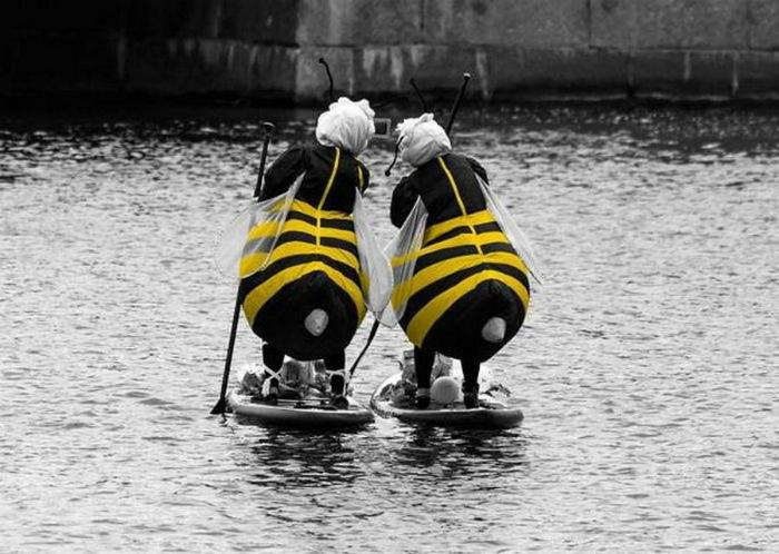 Пчелы на воде. | Фото: Поросёнка.нет.