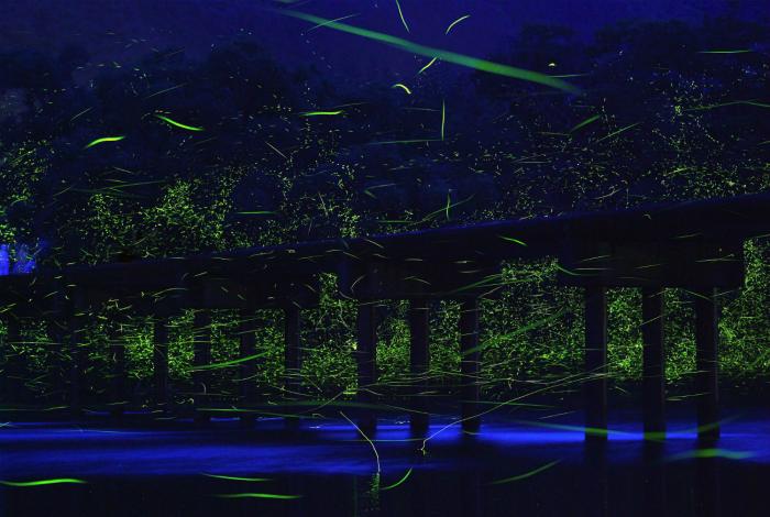Светлячки в Японии.