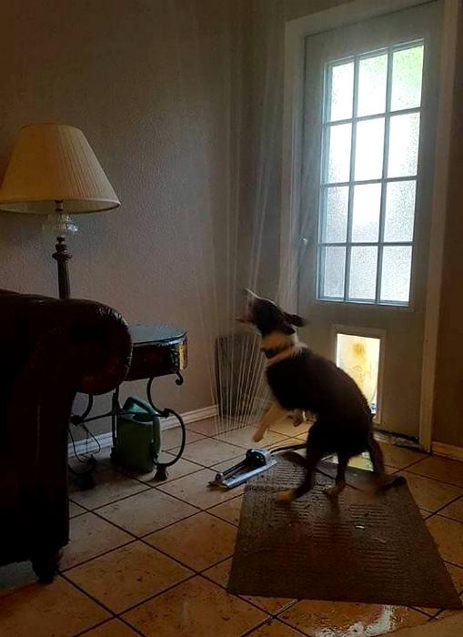«Кого-то ждет влажная уборка!» | Фото: Четвероногий юмор.