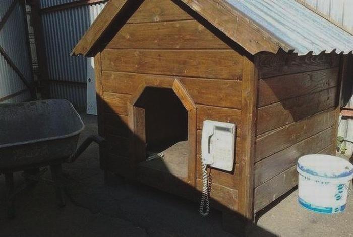 Зачем собаке домофон? | Фото: Reddit.