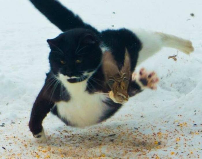 Похоже, котик настроен серьезно. | Фото: М.Двач.