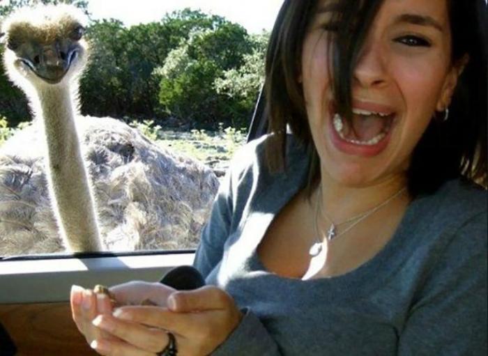Улыбающийся страус.