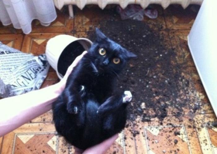 «Земля черная, я черный...» | Фото: LivelyPlanet.ru.