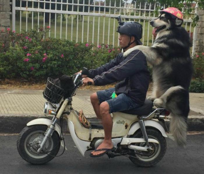 Веселый пассажир.