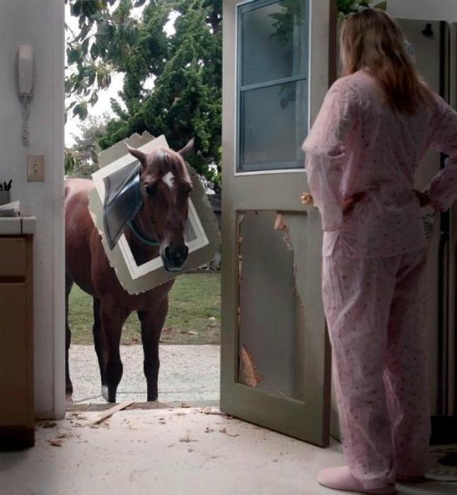 Непутевая лошадка.