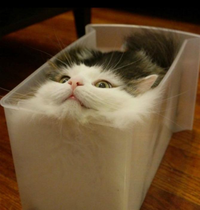Упакован и готов к отправке. | Фото: Bored Panda.