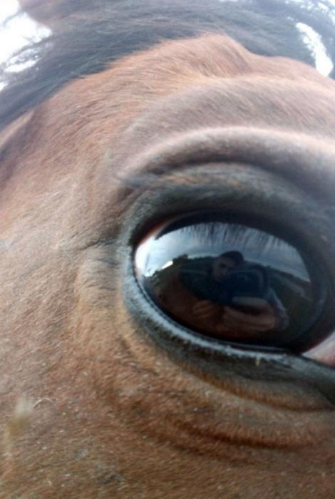 В глазу лошади.