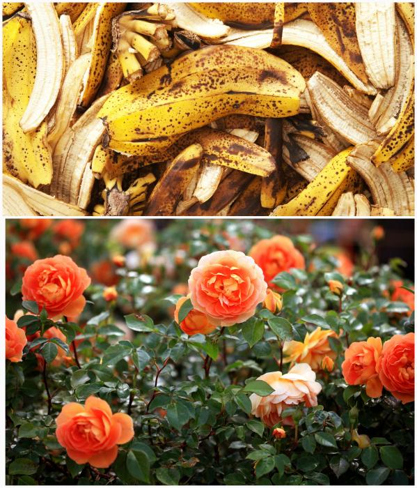 Банановая кожура для удобрения цветов.