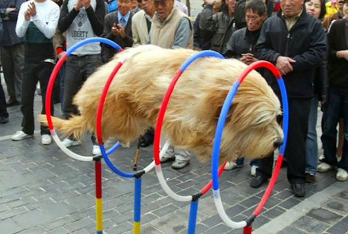 Собака в прыжке.