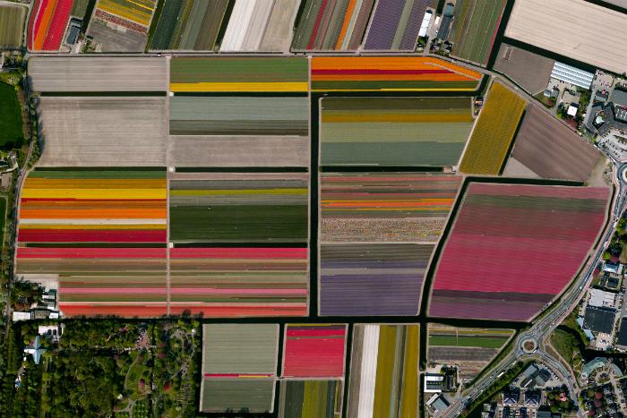 Огромные поля тюльпанов, которые тянуться вдоль всего города.
