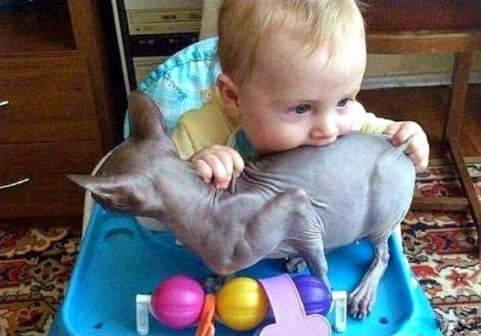 Котик похож на курочку.