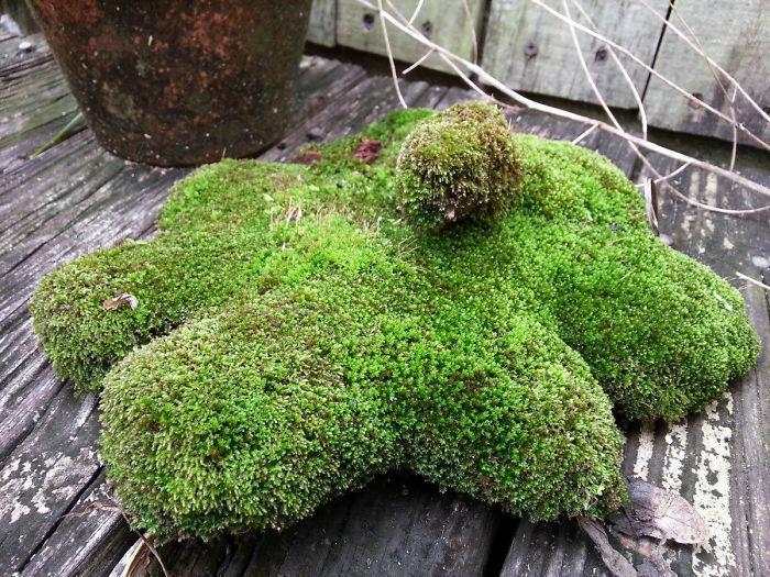 «Проросла» в саду.