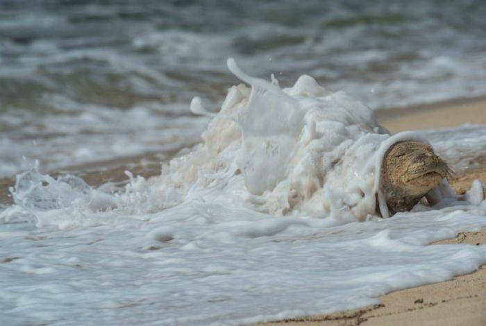 Заботливое море.