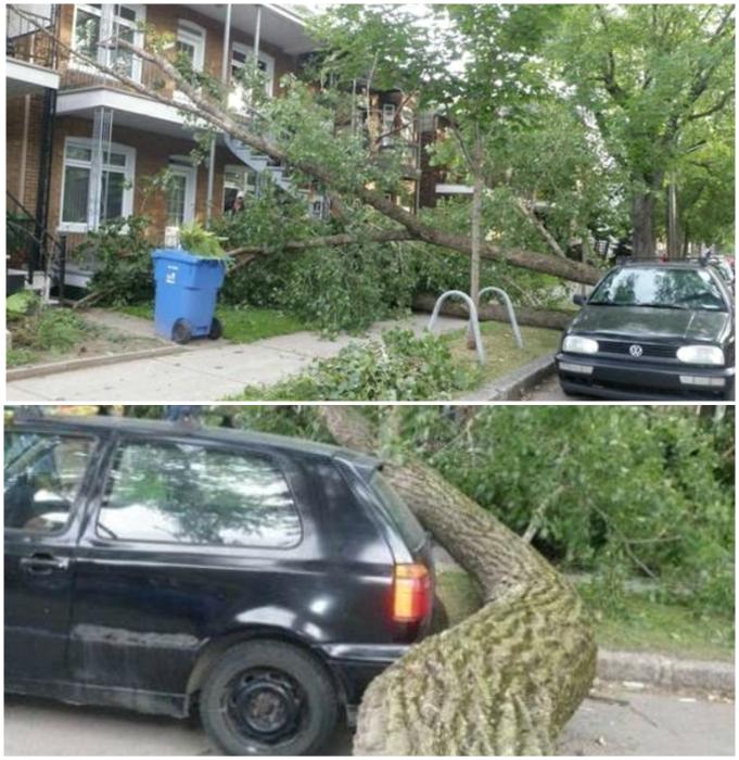 Деликатное дерево.