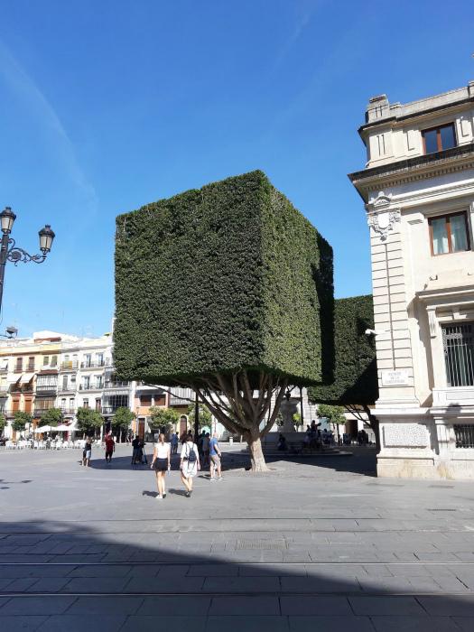 Особенности стрижки деревьев в Испании.   Фото: Reddit.