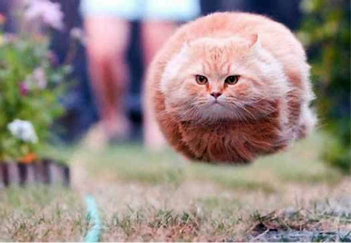 Реактивный кот.