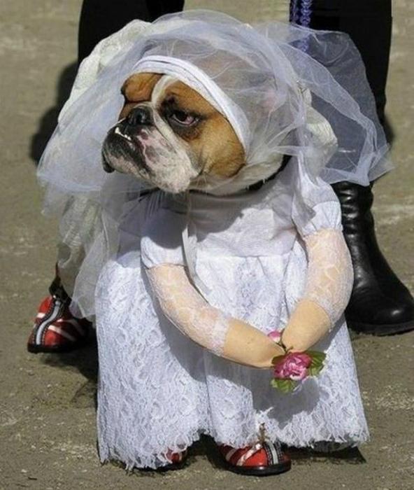Очаровательная невеста.