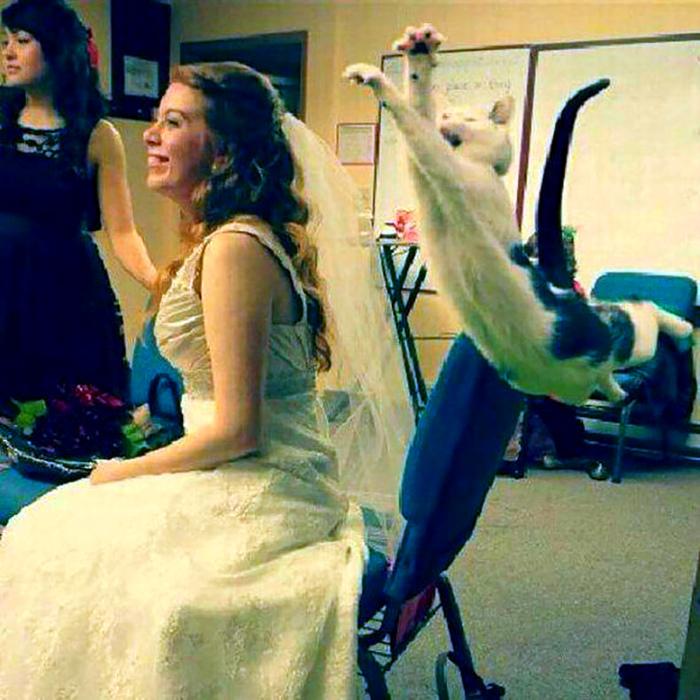 Кошка против свадьбы. | Фото: Невседома.