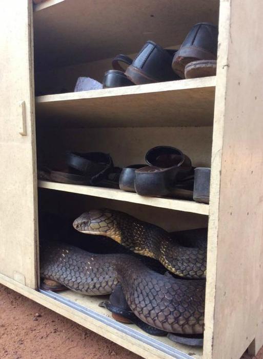 «А у вас есть изделия из змеиной кожи?» | Фото: ЯПлакалъ.