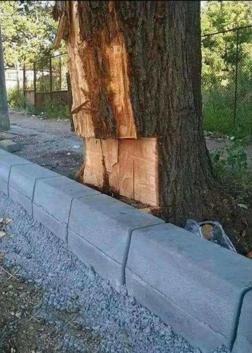 Когда нужно поставить дерево на место! | Фото: Klikabol.com.