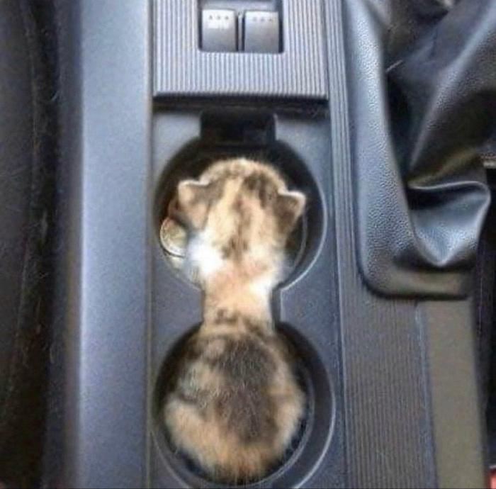 Котенок в подстаканнике. | Фото: ПолонСил.ру.