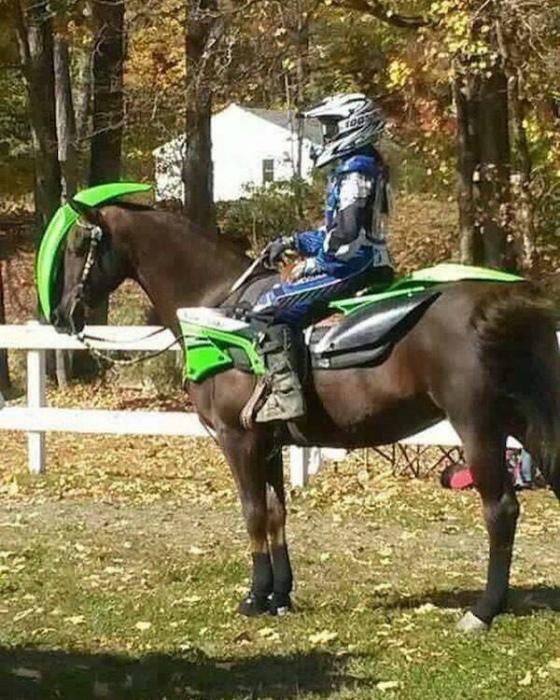 Главное - всегда быть на коне! | Фото: Телеграф.