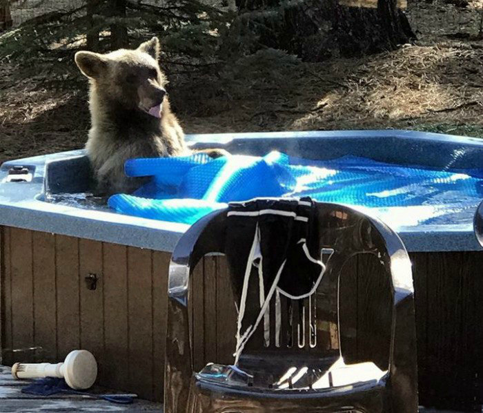 Медведи тоже хотят расслабляться! | Фото: Mixnews.