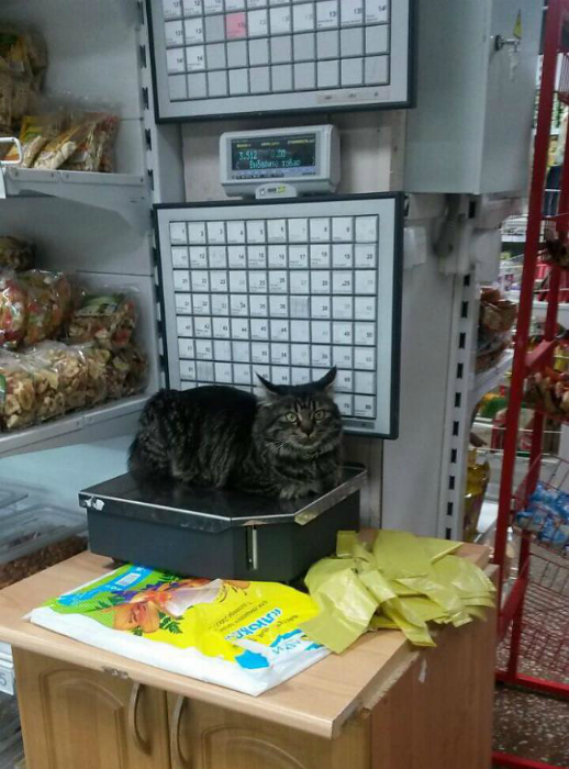 Забавный работник магазина.