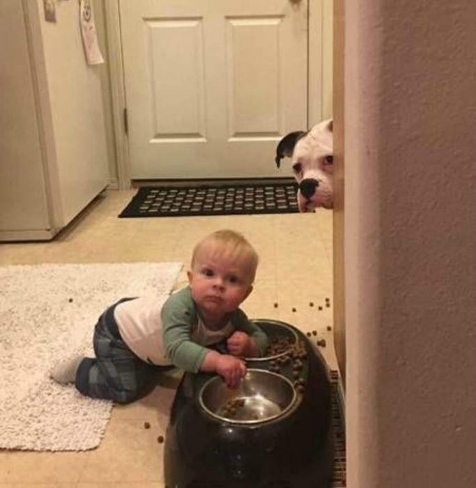 Печальный пес.