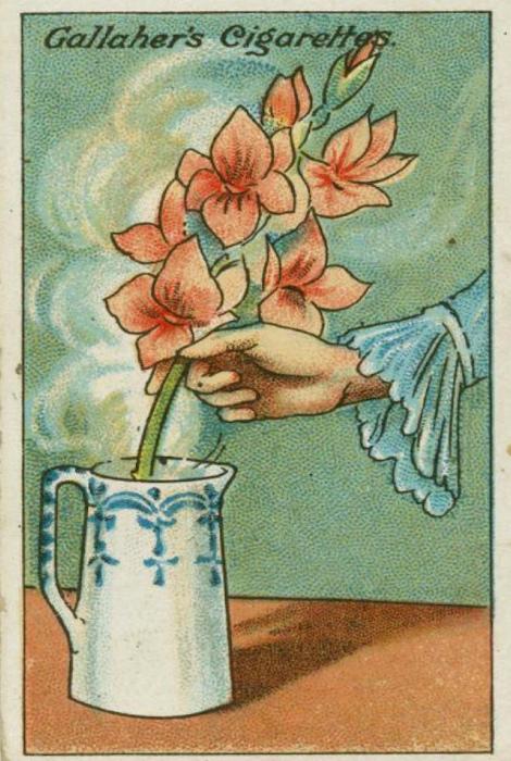 Увядшие цветы.