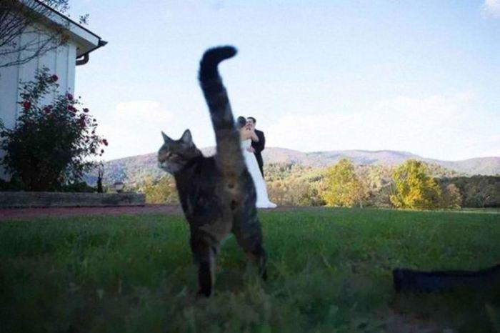 Кошка вовремя решила продемонстрировать свой хвост.