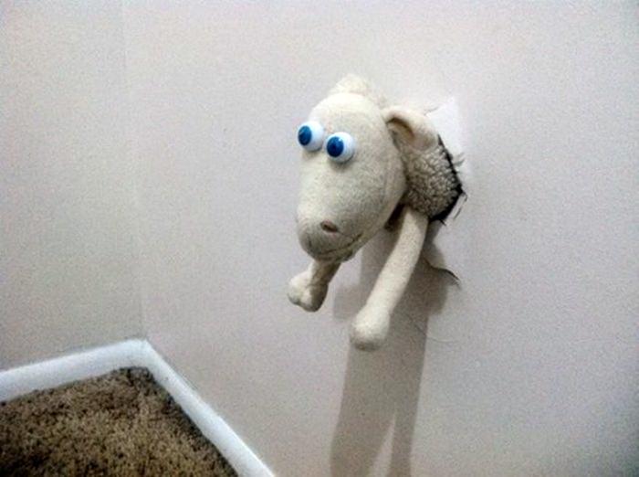 «Ку-ку», - говорит барашек. | Фото: Главком.