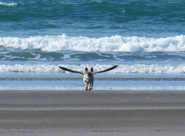 Когда нашел свои крылья... | Фото: Pinterest.